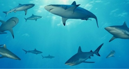 The Sharks are circling!….by I'm Spartacus.